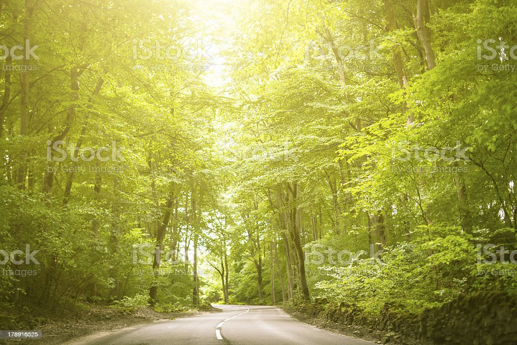 Driving through the vegetation royalty-free stock photo