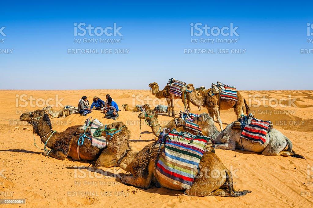 Dromedaries and camel driver relaxing in dunes of Sahara desert stock photo