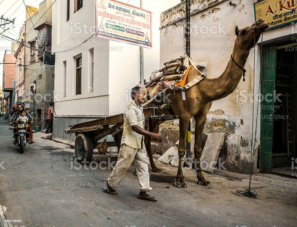 Dromedary in Bikaner Rajasthan India stock photo