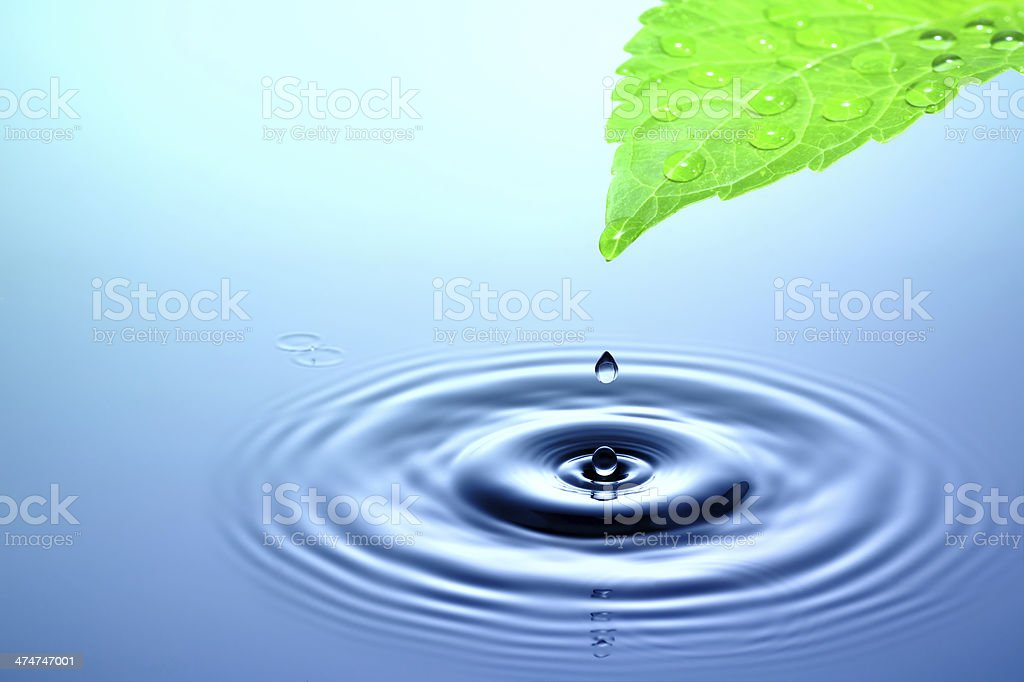 Drop of water falling from a green leaf stock photo