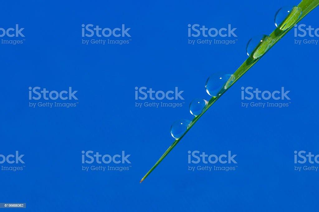 Gota de água sobre a Folha foto de stock royalty-free