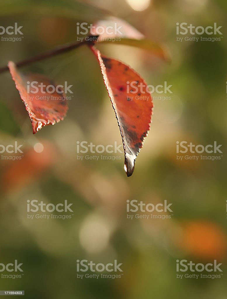 Drop on a leaf royalty-free stock photo
