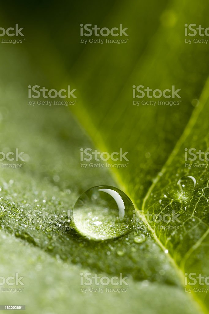 Drop on Leaf - Green Nature Water Environment royalty-free stock photo