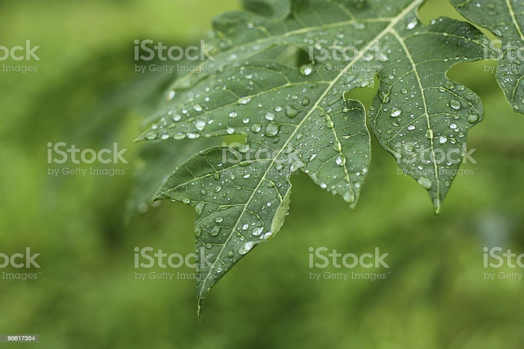 Drop on leaf royalty-free stock photo