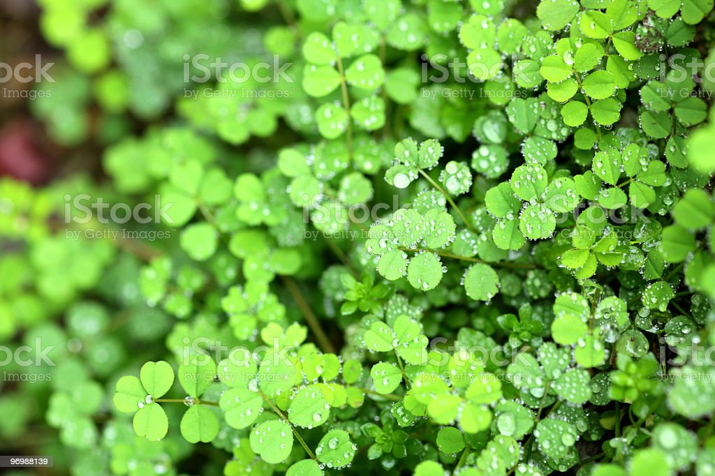Drop on the leaf royalty-free stock photo