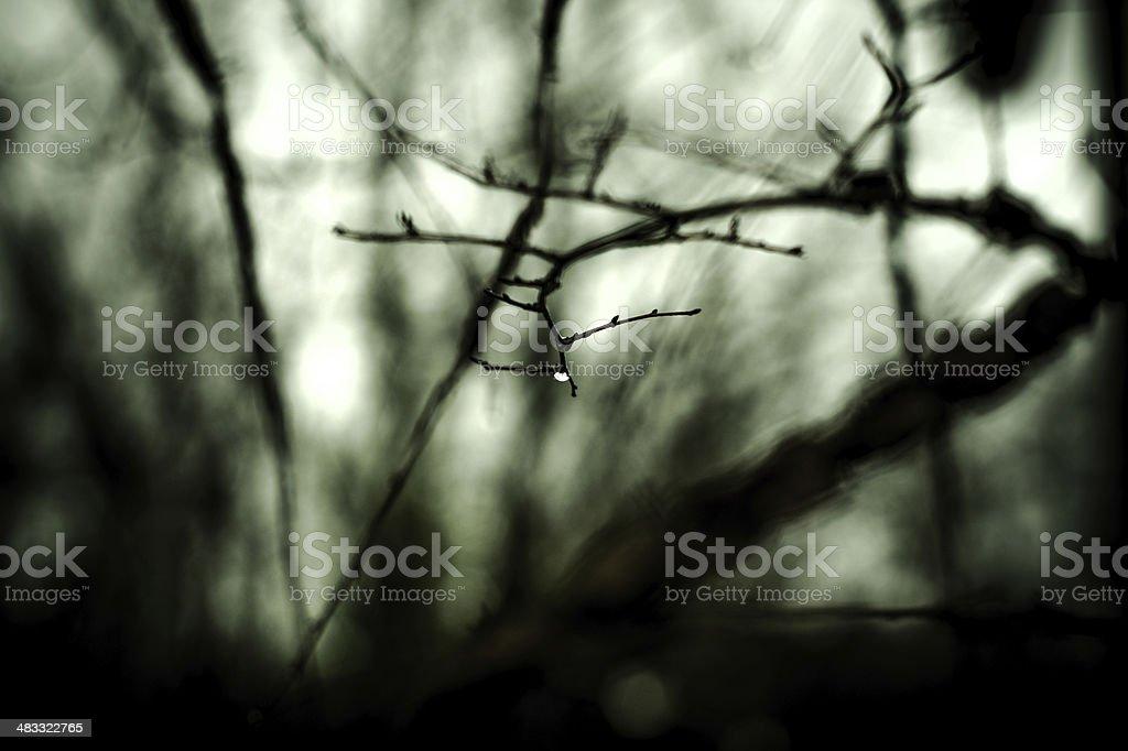 Drop on tree branch, Winter stock photo