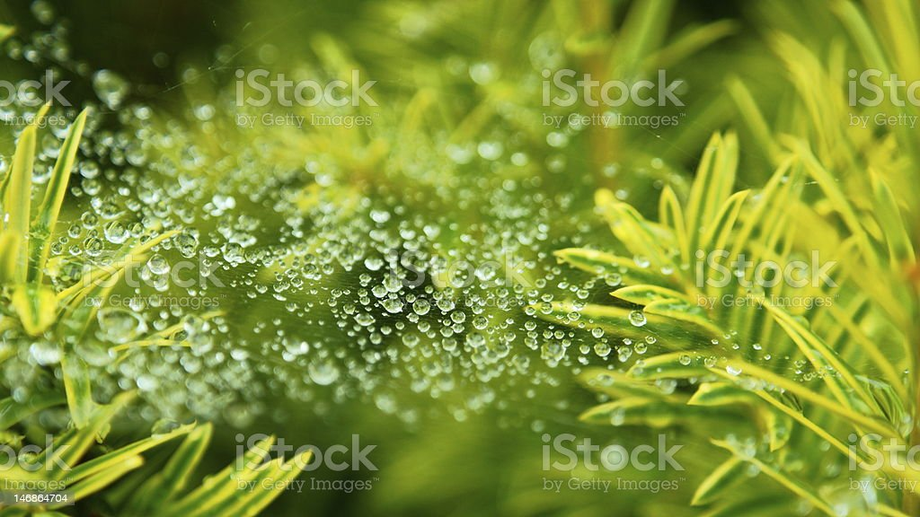 Drop on web royalty-free stock photo