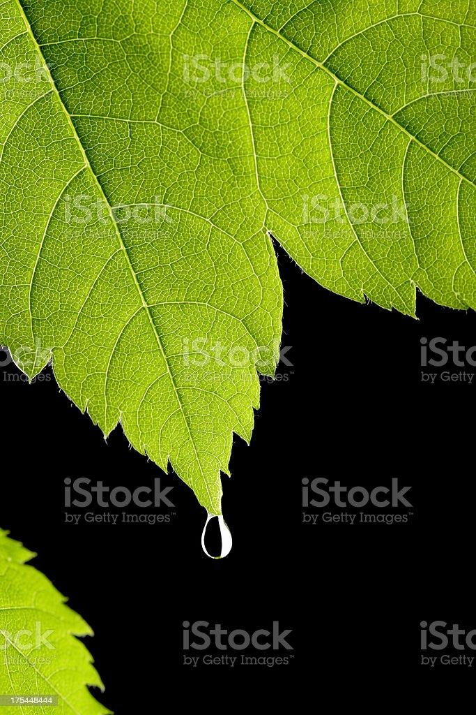 Drop stock photo