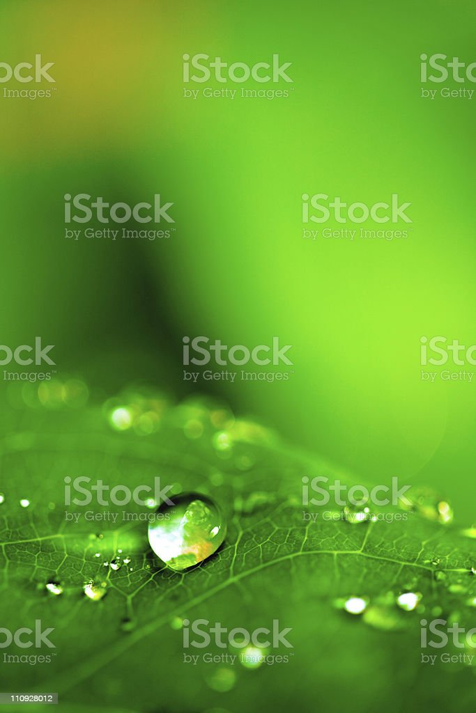 Droplet on leaf royalty-free stock photo