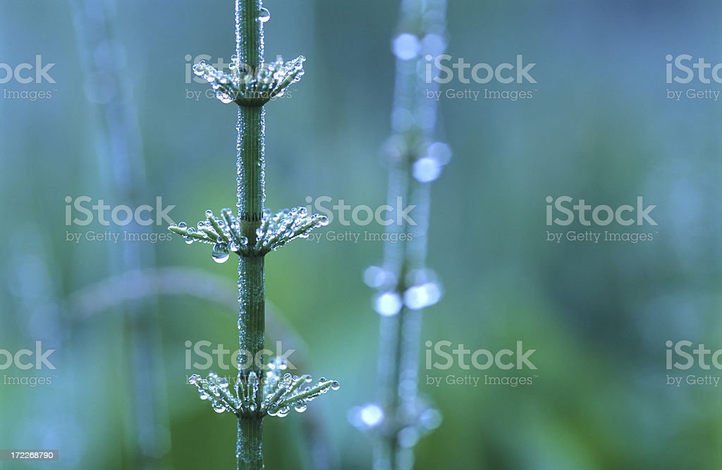 Drops in the early morning royalty-free stock photo