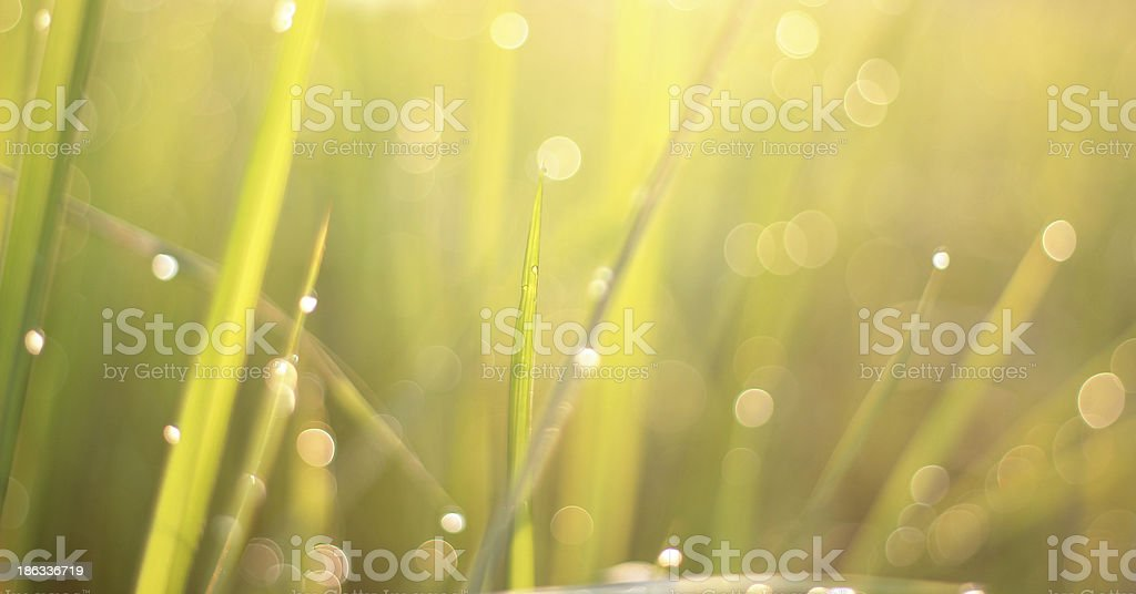 Drops of water in the morning. royalty-free stock photo