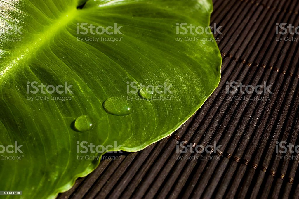Drops on a leaf royalty-free stock photo