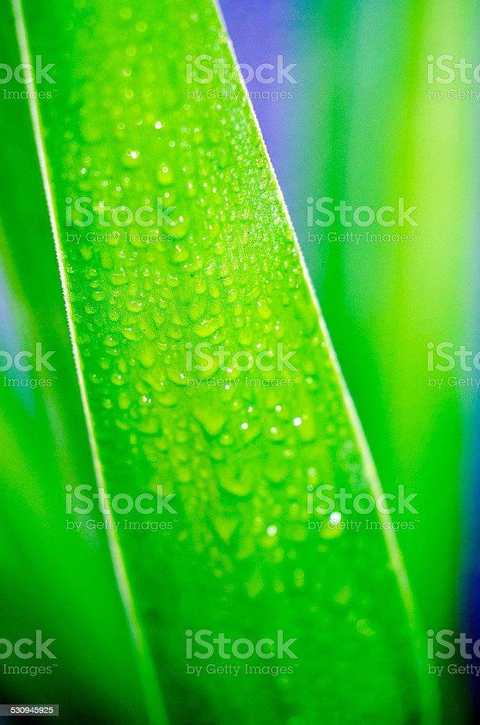 drops on a palm leaf as background stock photo