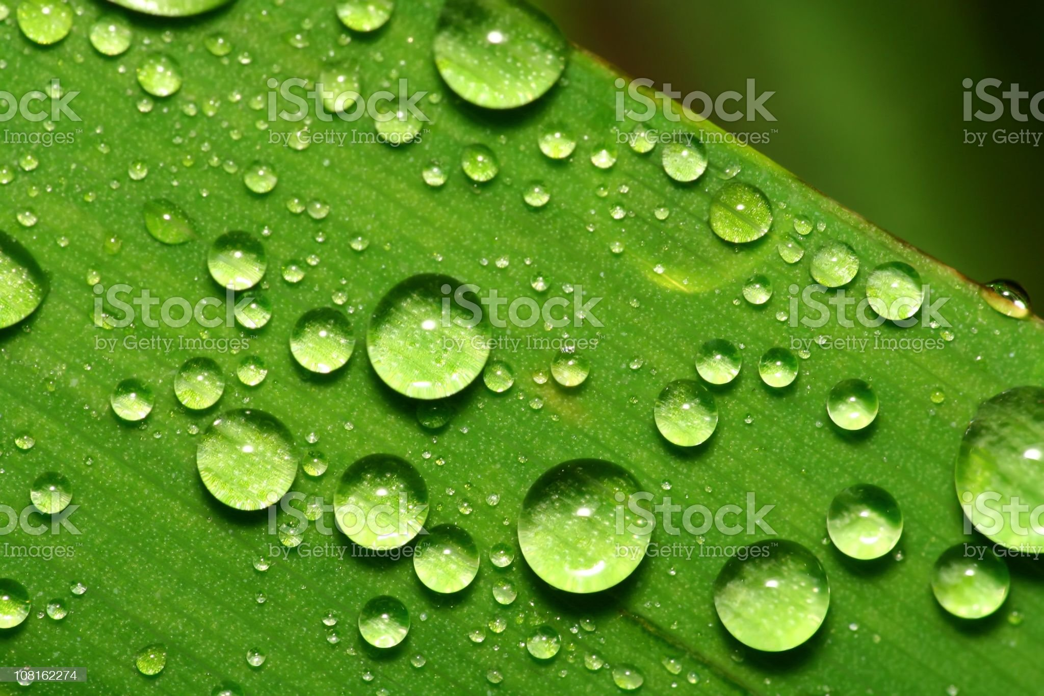 Drops on Blade of Grass royalty-free stock photo