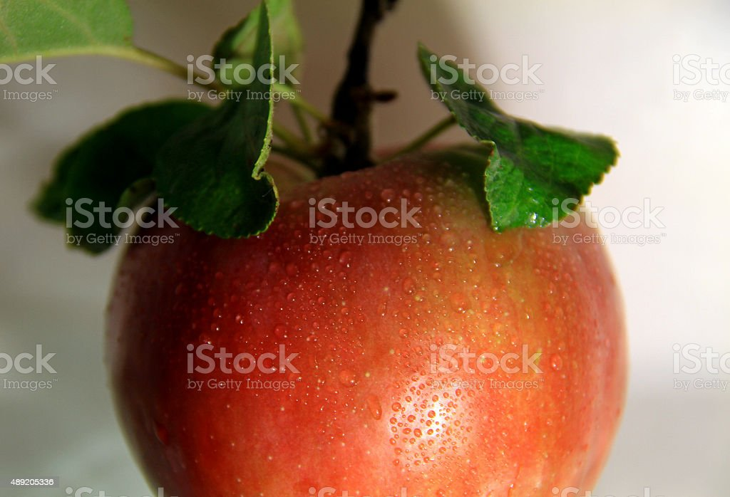 Drops on juicy apple with leaves on the stalk studio isolated stock photo