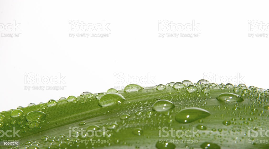 drops on leaf royalty-free stock photo