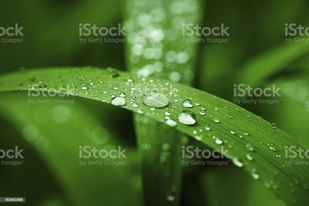 Drops on leaves stock photo