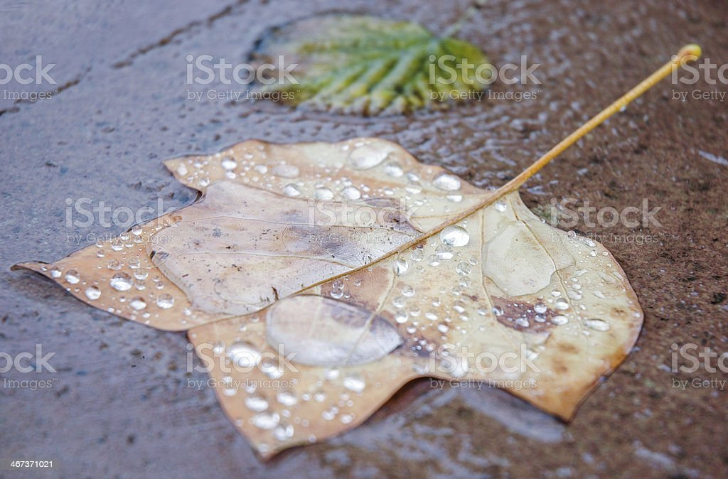 Drops over dhe dried leaf stock photo