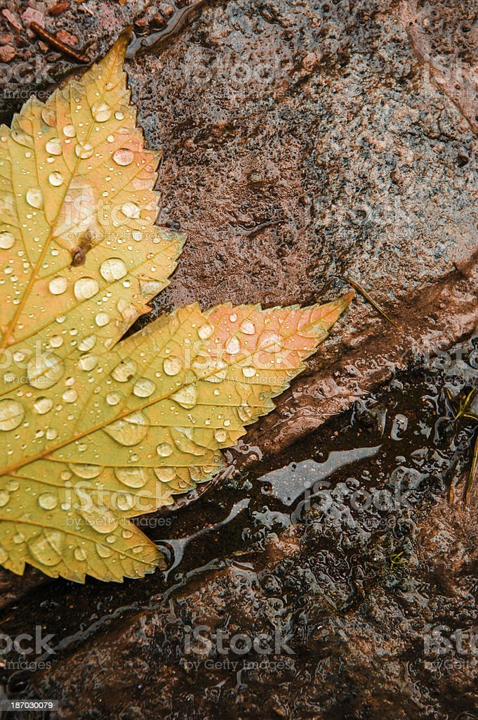 Drops over the yellow leaf in autumn time stock photo