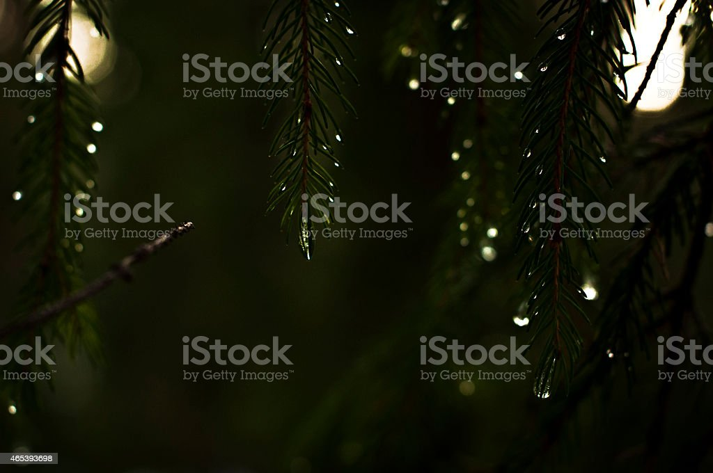 drops stock photo