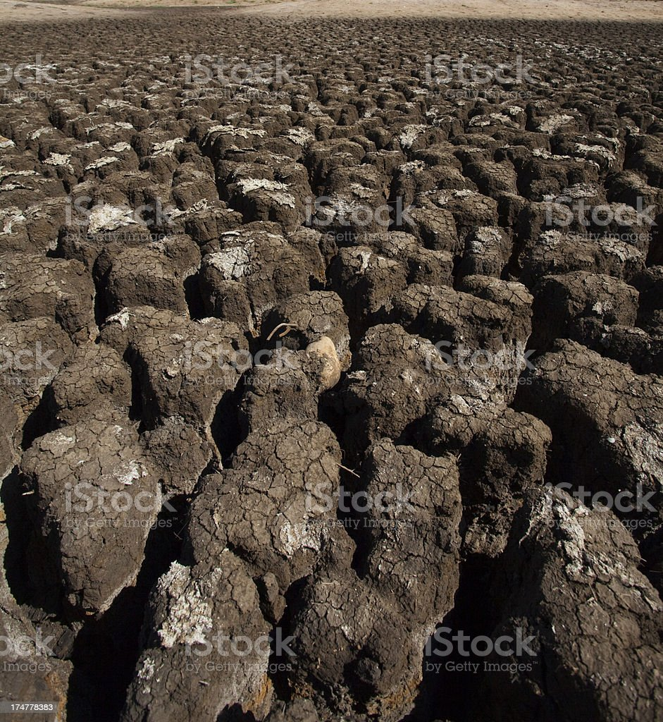 Drought in Brazil Northeast royalty-free stock photo