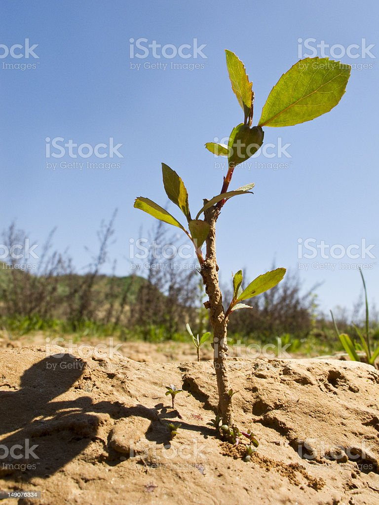 drought land in the fields royalty-free stock photo
