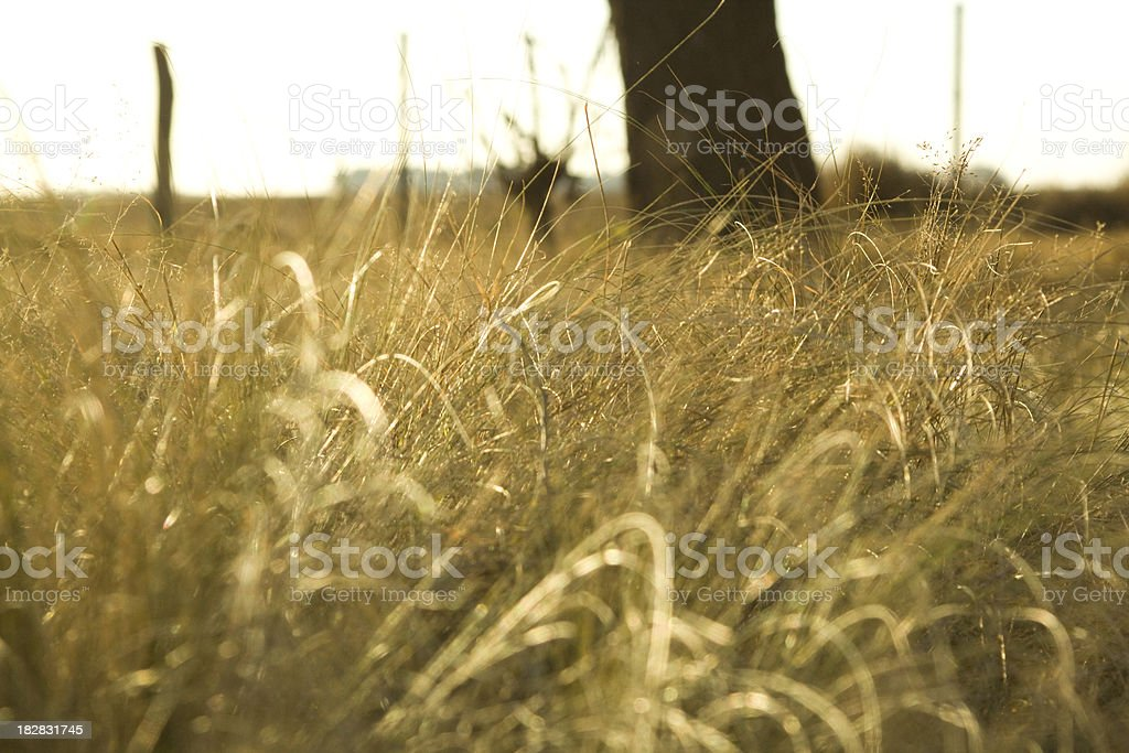 Drought Landscape royalty-free stock photo