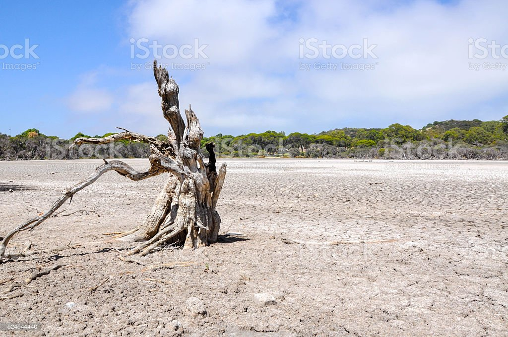Drought: Leafless in the Lakebed stock photo