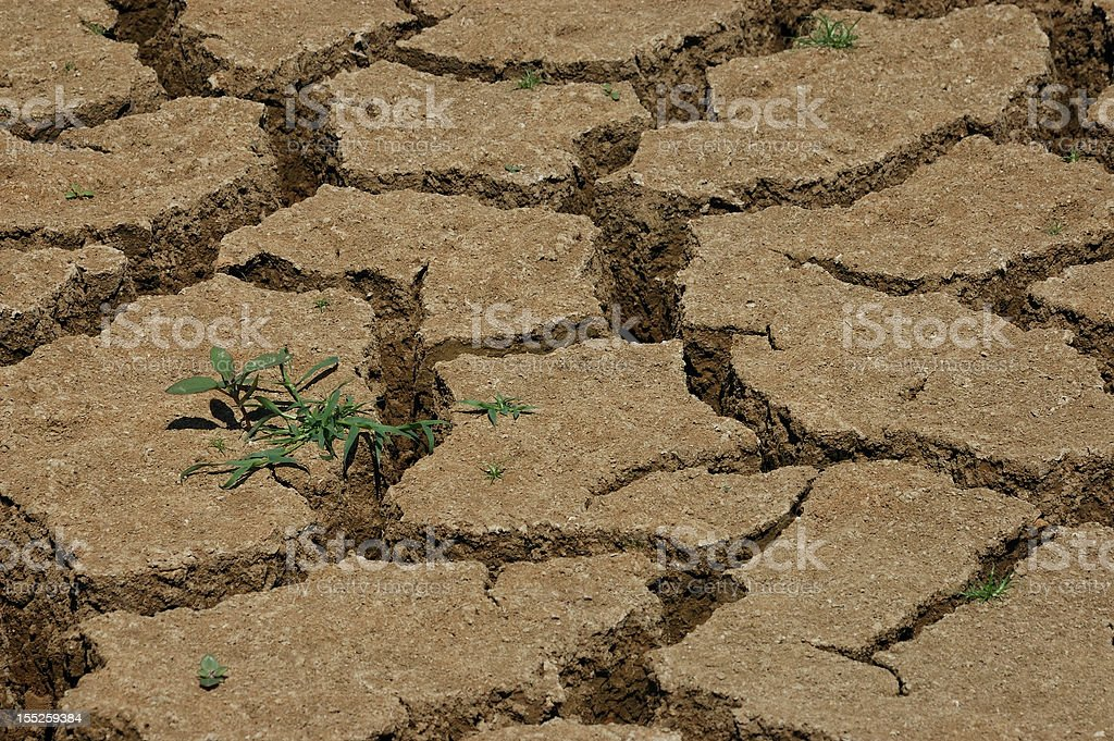 drought on the earth stock photo