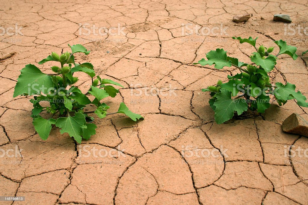 Drought. royalty-free stock photo