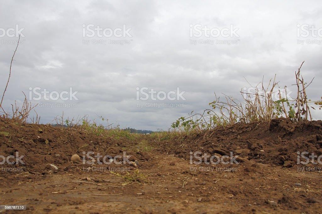 Drought Stricken Fruit Crops stock photo