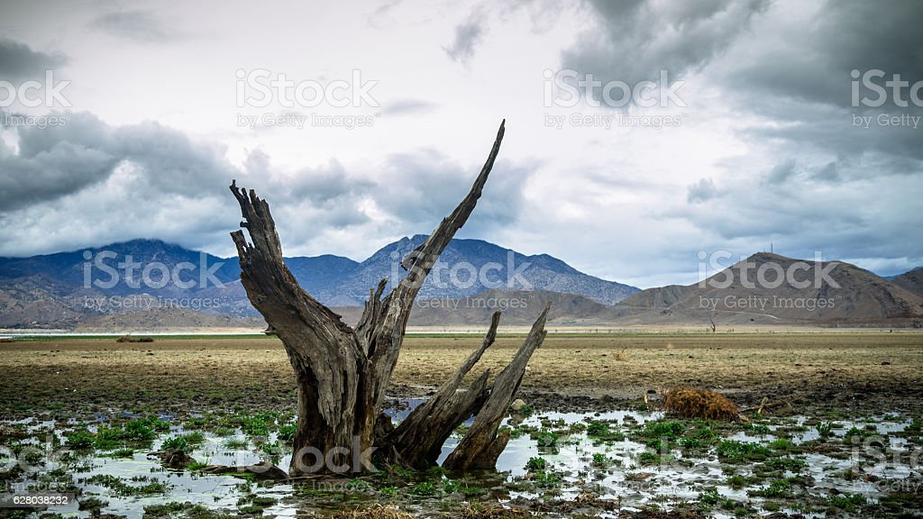Drought Stricken Lake With Dead Tree stock photo
