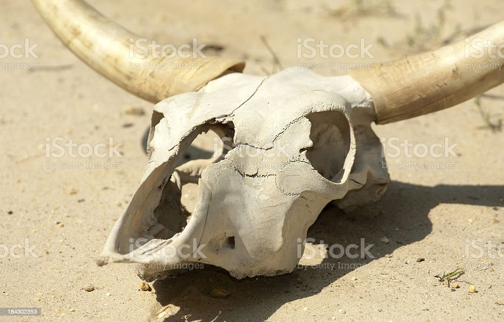Drought To Dust stock photo