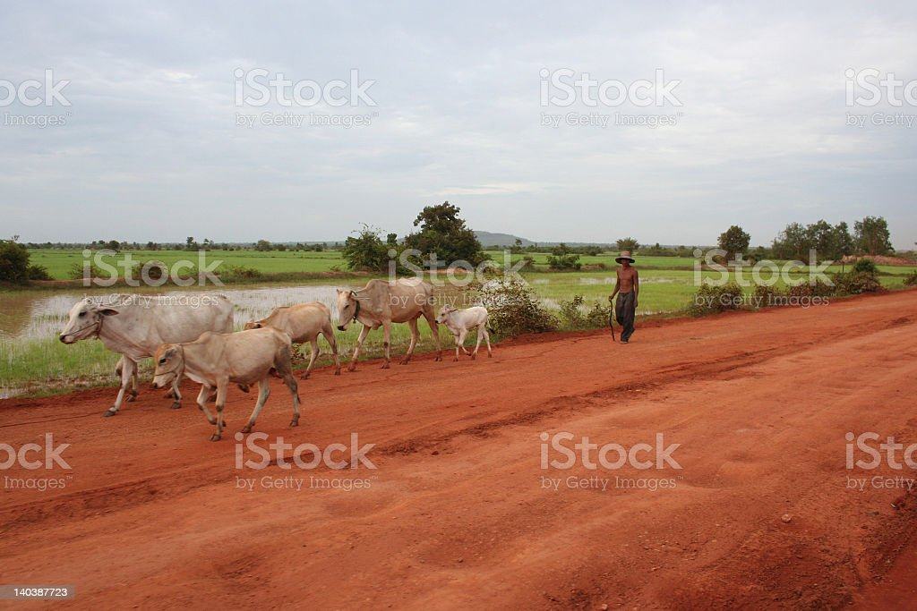 Drover on the road - Cambodia stock photo