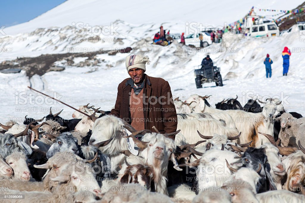Drover with goats walking across Rohtang La Pass in Ladakh stock photo