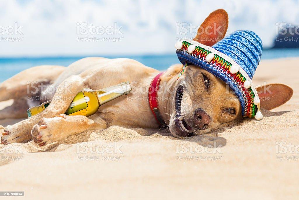 drunk  dog on the beach stock photo