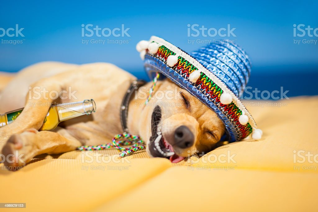 drunk mexican dog stock photo