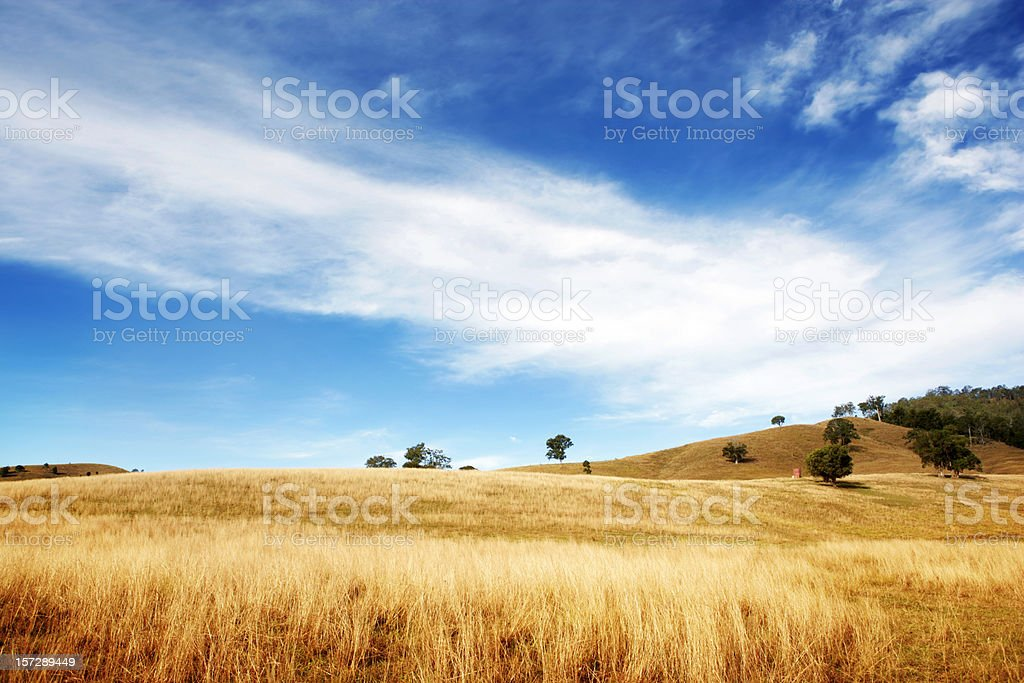 Dry and Beautiful royalty-free stock photo