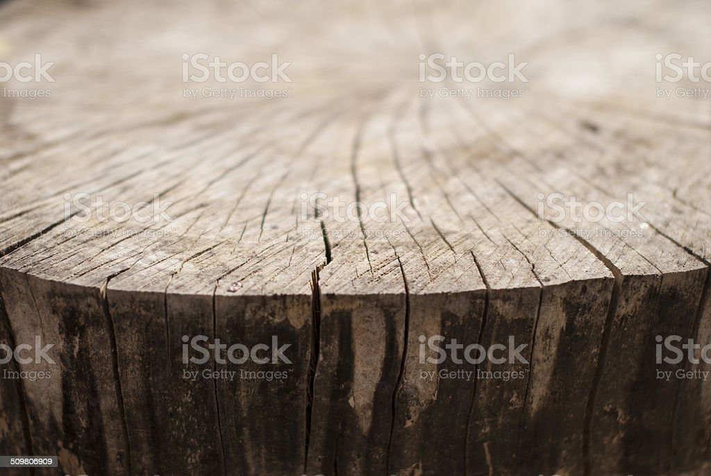 dry and cracked edge of tree trunk, royalty-free stock photo
