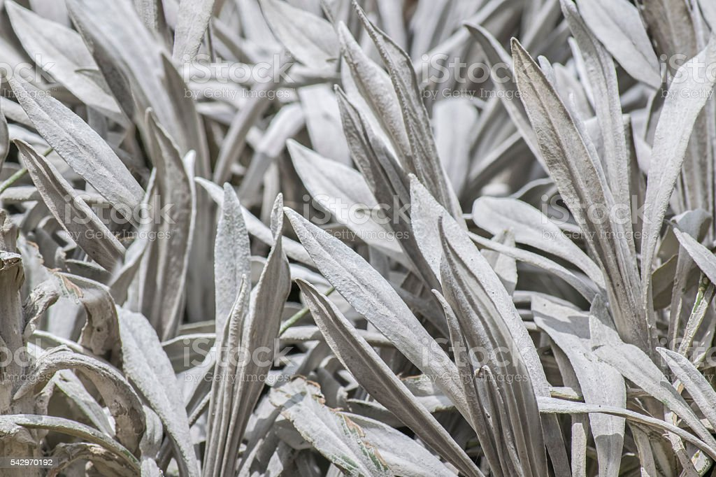 Dry Andean Plants Closeup stock photo