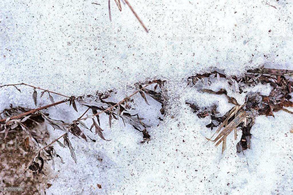 Dry autumn grass under snow stock photo