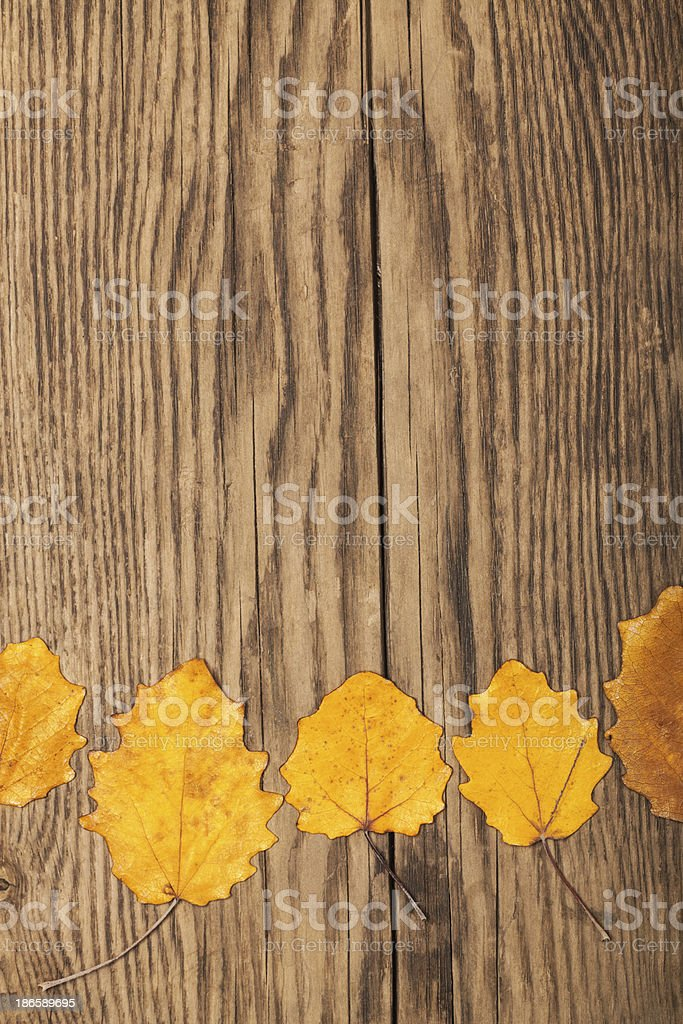 Dry autumn leaves on old plank royalty-free stock photo
