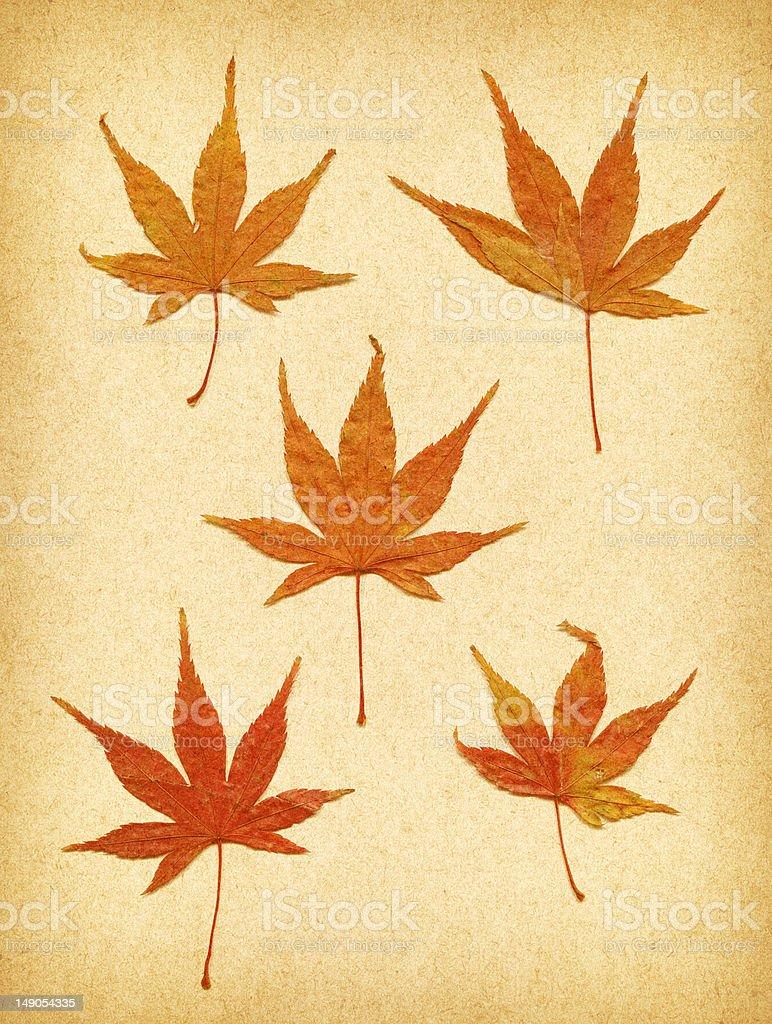 Trocken Herbst Blätter Lizenzfreies stock-foto