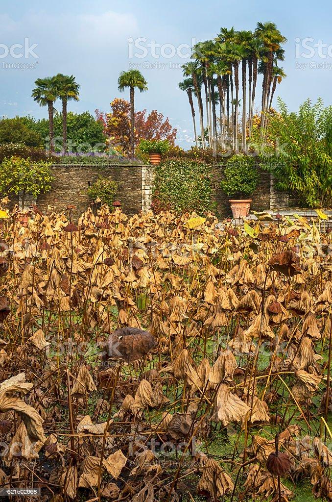 Dry autumn plants royalty-free stock photo
