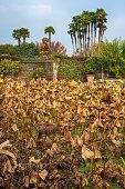 Dry autumn plants