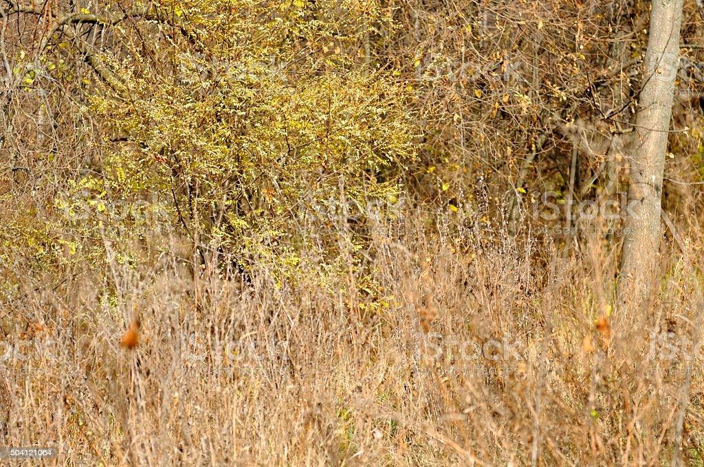 Dry Autumn Vegetation stock photo