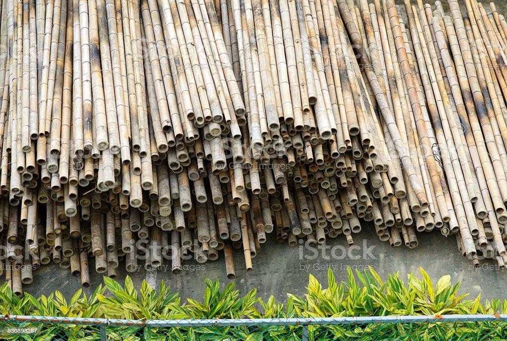Dry bamboo stack stock photo