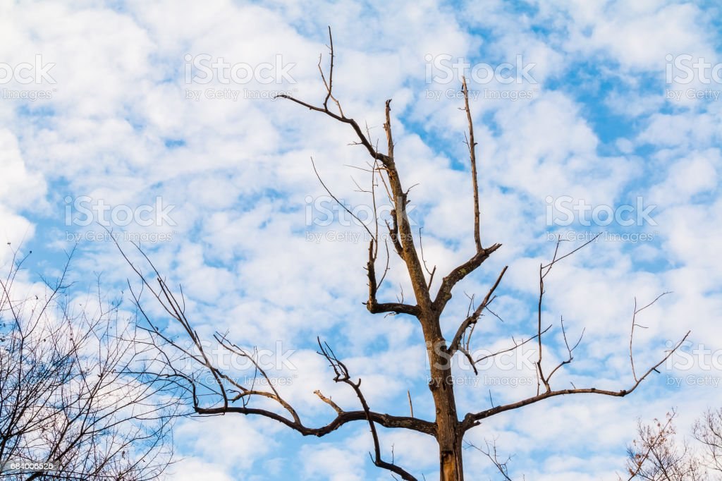 Dry bare tree and cloudy sky stock photo