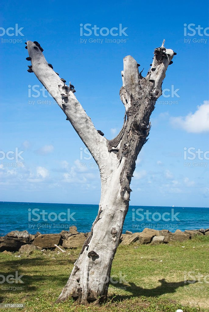"dry bare tree trunk in ""Y"" shape near sea royalty-free stock photo"