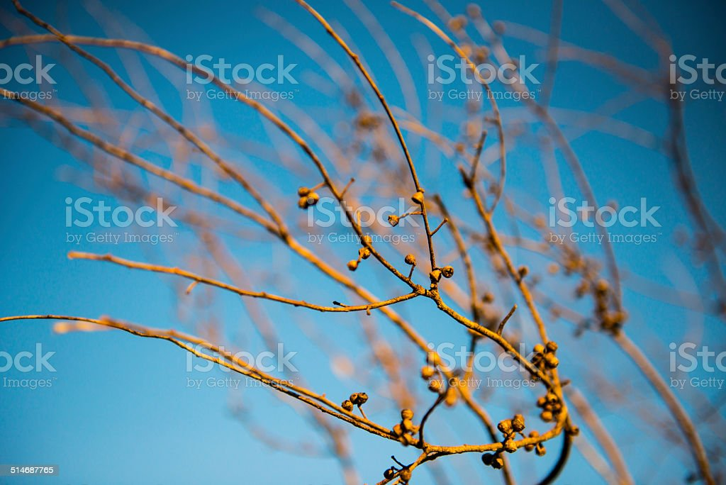 Dry branch stock photo